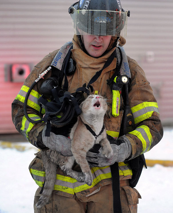 firefighters-rescuing-animals-saving-pets-10-5729a90abf0d0__605