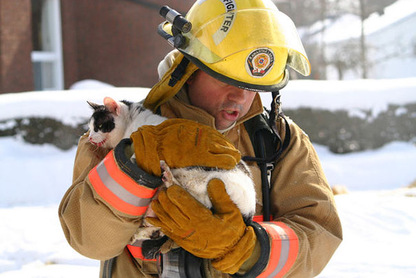 firefighters-rescuing-animals-saving-pets-17-5729c787b4839__605