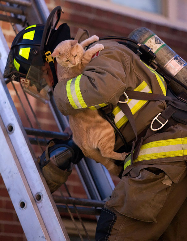 firefighters-rescuing-animals-saving-pets-21-5729e0dd671d4__605