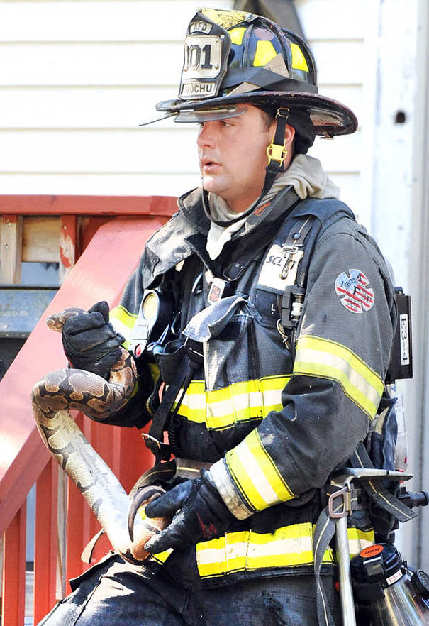 firefighters-rescuing-animals-saving-pets-28-5729fd5753248__605