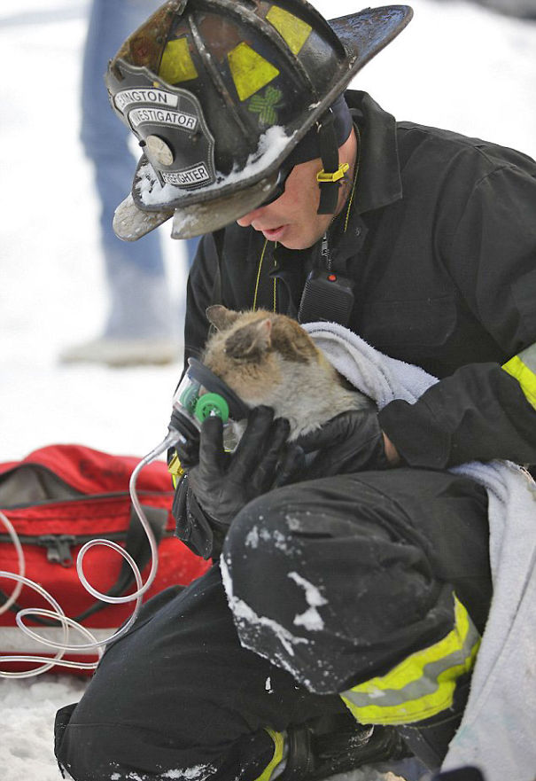 firefighters-rescuing-animals-saving-pets-29-5729ff6c27353__605