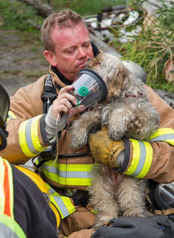 firefighters-rescuing-animals-saving-pets-4-5729a8fd735e5__605