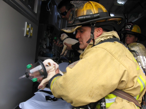 firefighters-rescuing-animals-saving-pets-44-5729ef5cba12e__605