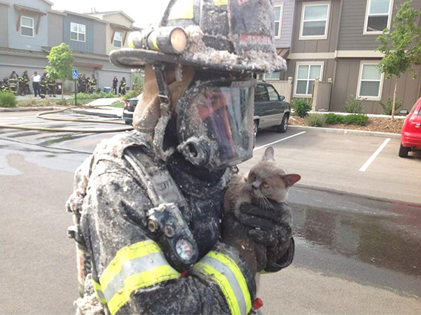 firefighters-rescuing-animals-saving-pets-46-5729f1701c122__605