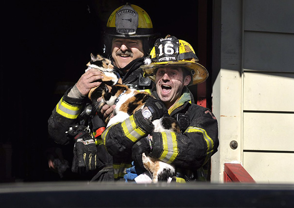 firefighters-rescuing-animals-saving-pets-48-5729f2cc68948__605