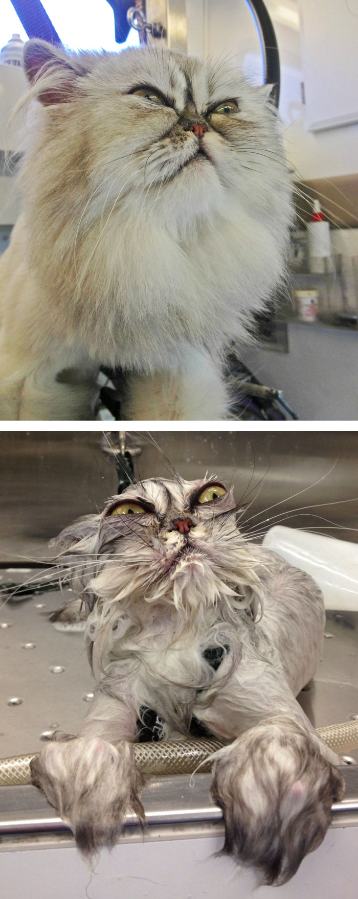 funny-wet-pets-before-after-bath-dogs-cats-49-5728af03c4553__700 (1)