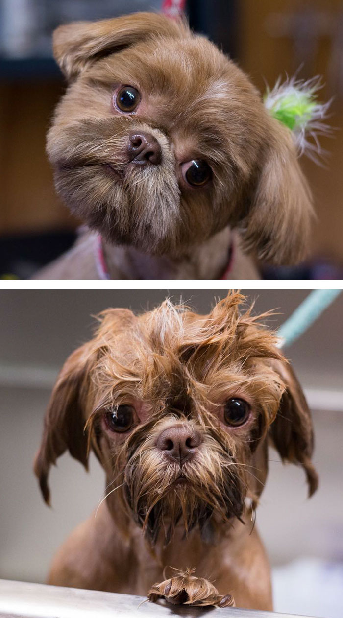 funny-wet-pets-before-after-bath-dogs-cats-56-5728bd3f0658c__700