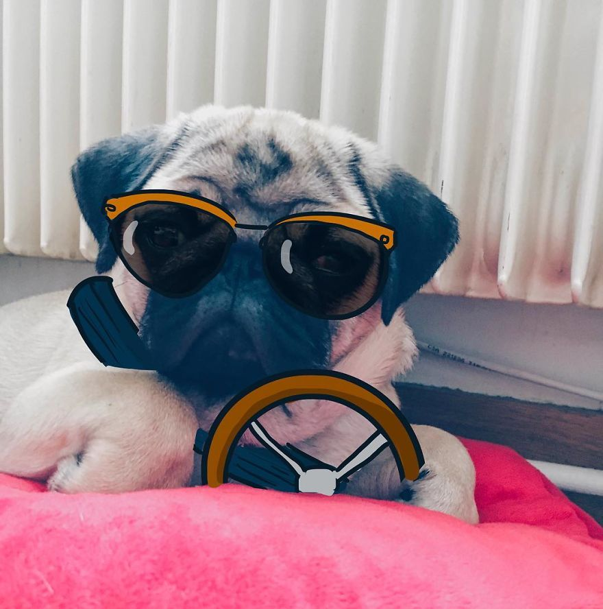 My-GF-I-love-to-doodle-on-our-Pugs-face-18-pics-5760fadb90b84__880