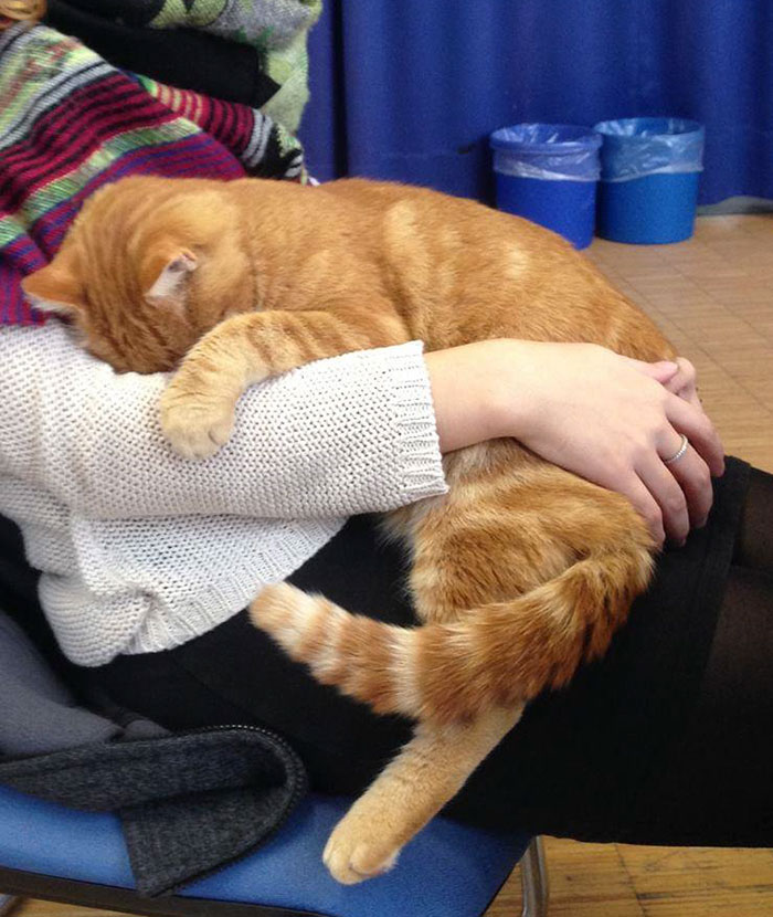 campus-cat-university-cuddles-augsburg-germany-16