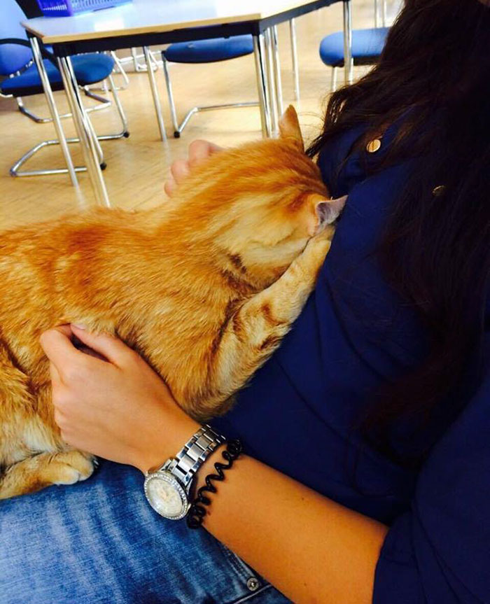 campus-cat-university-cuddles-augsburg-germany-28