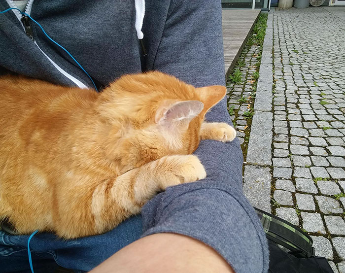 campus-cat-university-cuddles-augsburg-germany-4