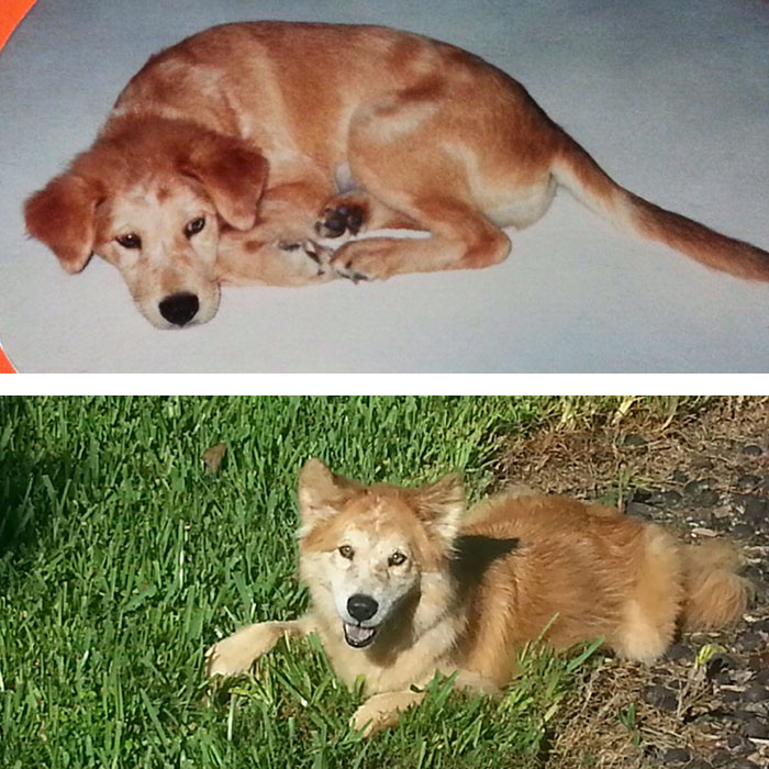 before-after-pets-growing-old-first-last-photos-42-577ba7dba4899__700