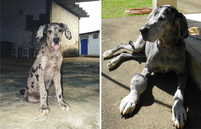 before-after-pets-growing-old-first-last-photos-44-577bac4c93aad__700