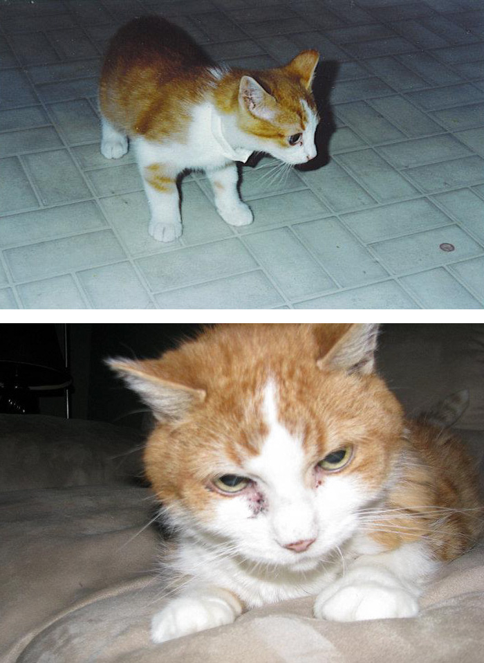 before-after-pets-growing-old-first-last-photos-8-577b77e3071ba__700