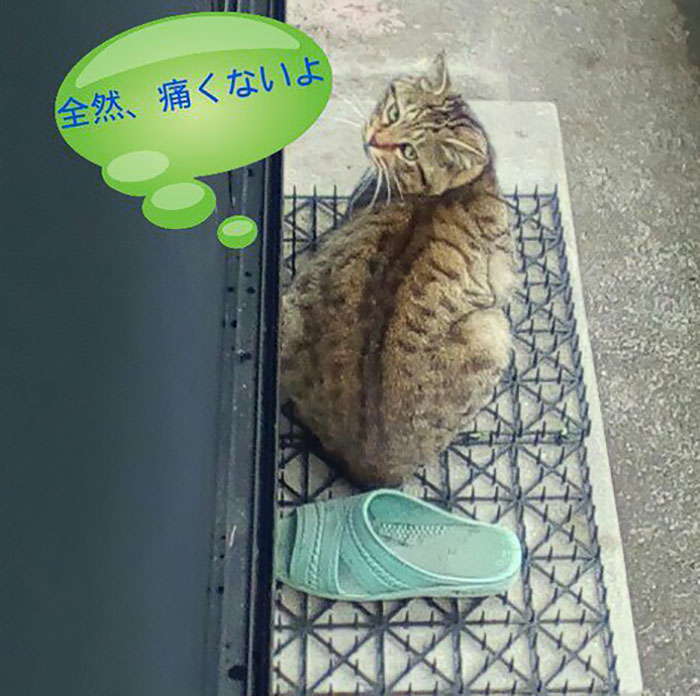 cats-build-resistance-deterring-spikes-japan-10-58528d899f975__700